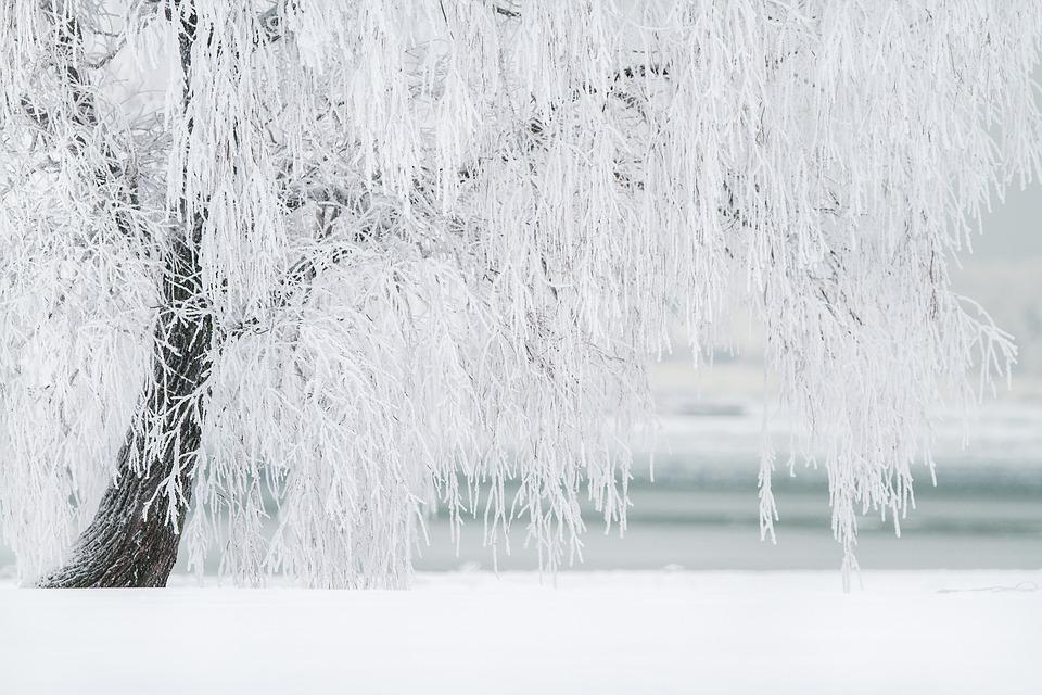 Winter Trees Planting Omaha