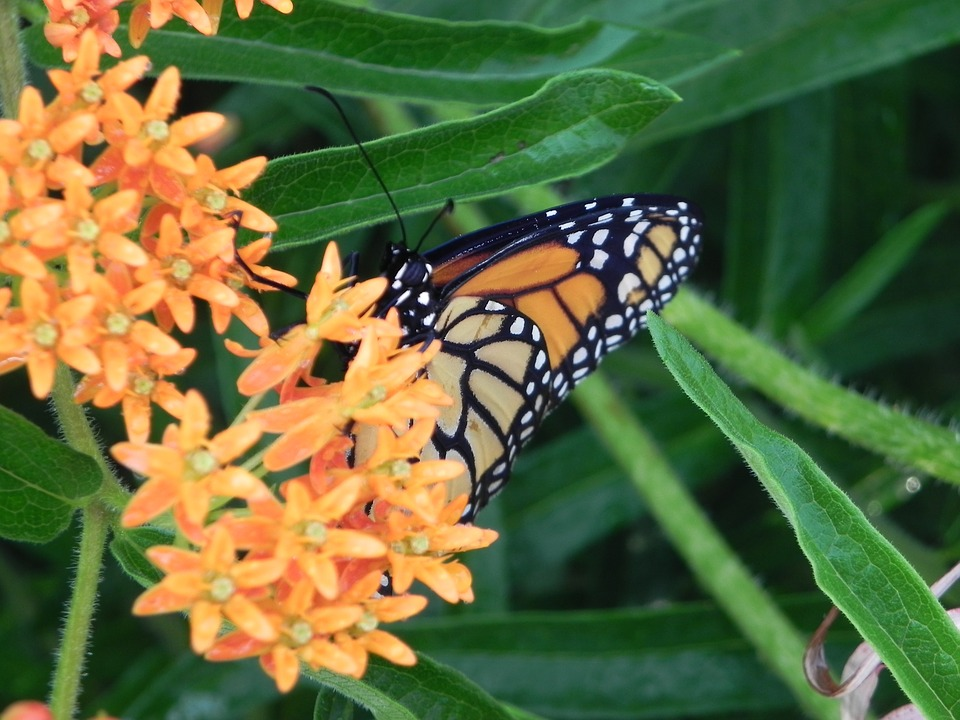 Landscaping with Native Midwest Plants