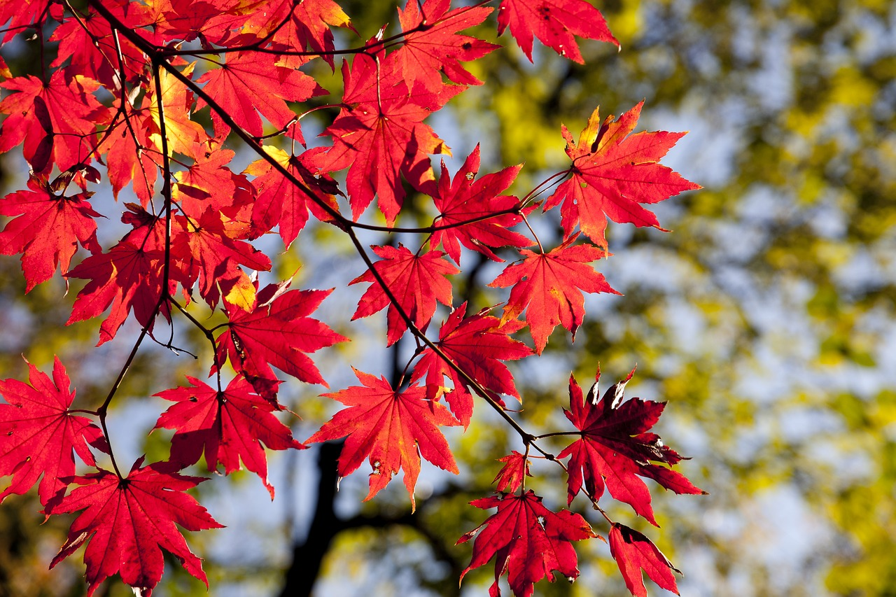 Why is Autumn the Best Time to Plant Trees?