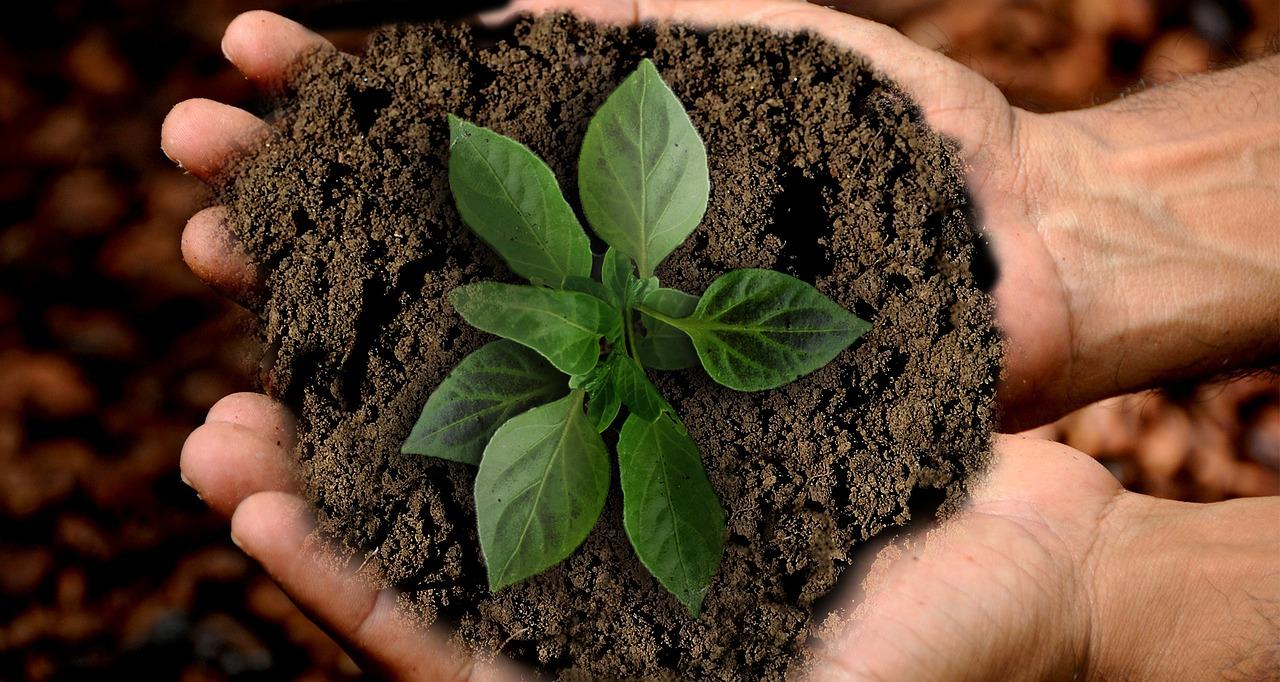 Growing Healthy Plants
