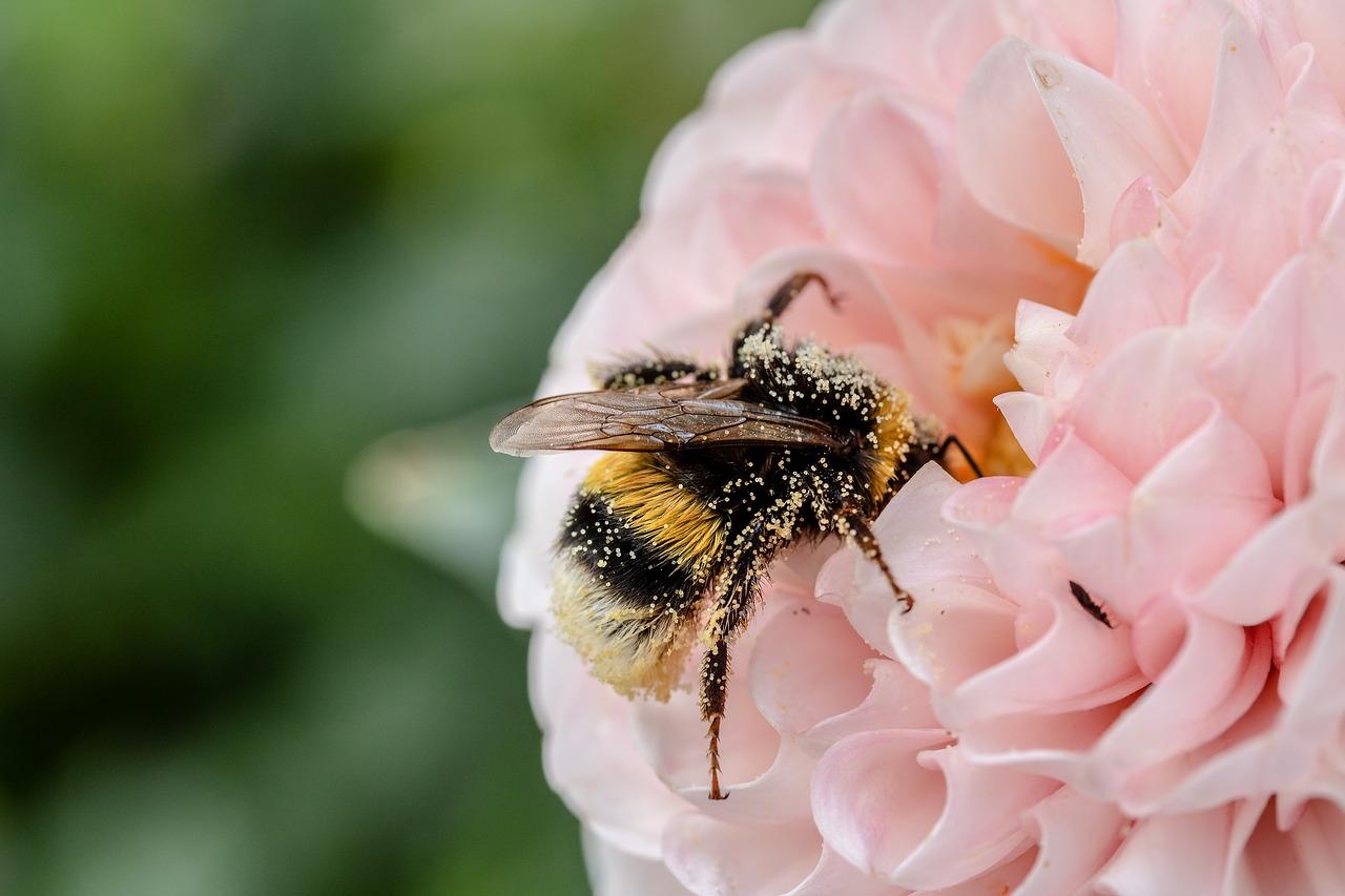 Plants Attracting Pollinators In Omaha, NE