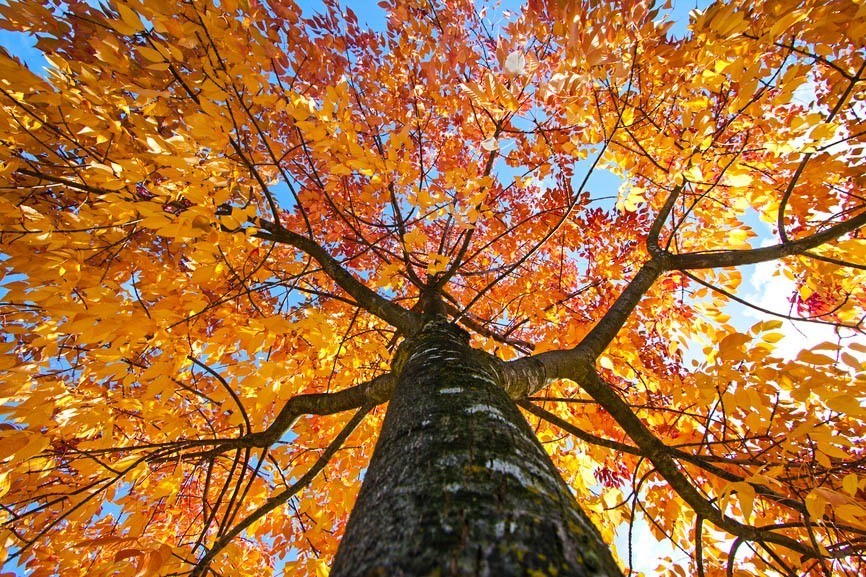 Trees and Energy Saving