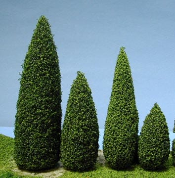 Evergreen Trees Proper Spacing