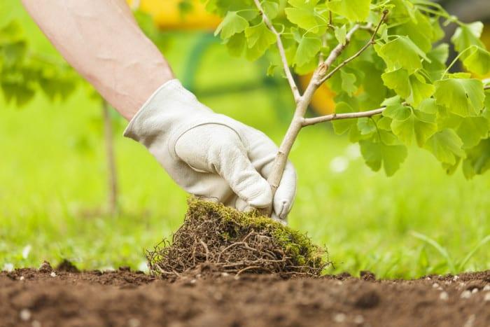 Tree Planting Myth
