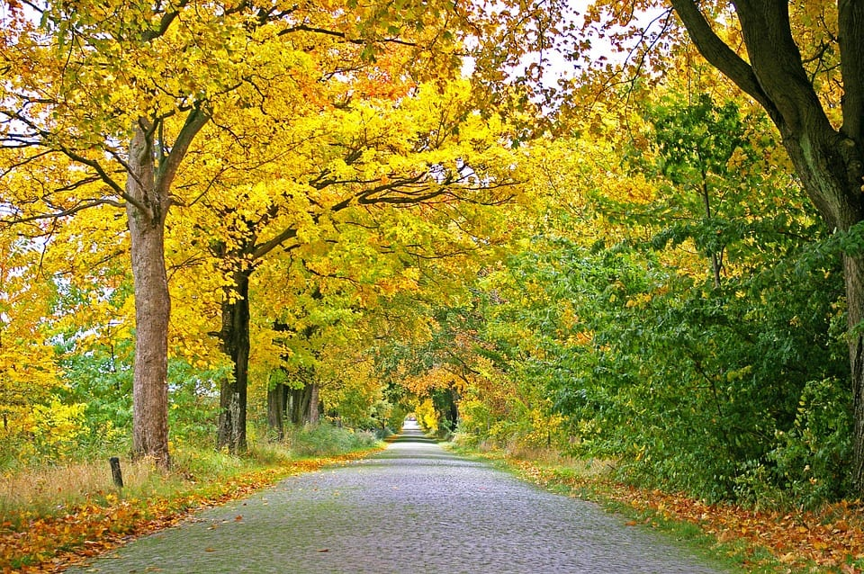 Fall Planting Season
