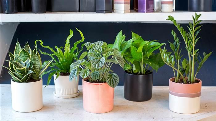 5 Plants For Better Sleep