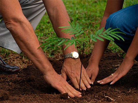When To Plant Trees