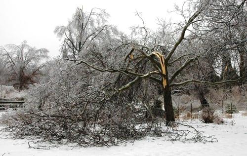 Winter Damage