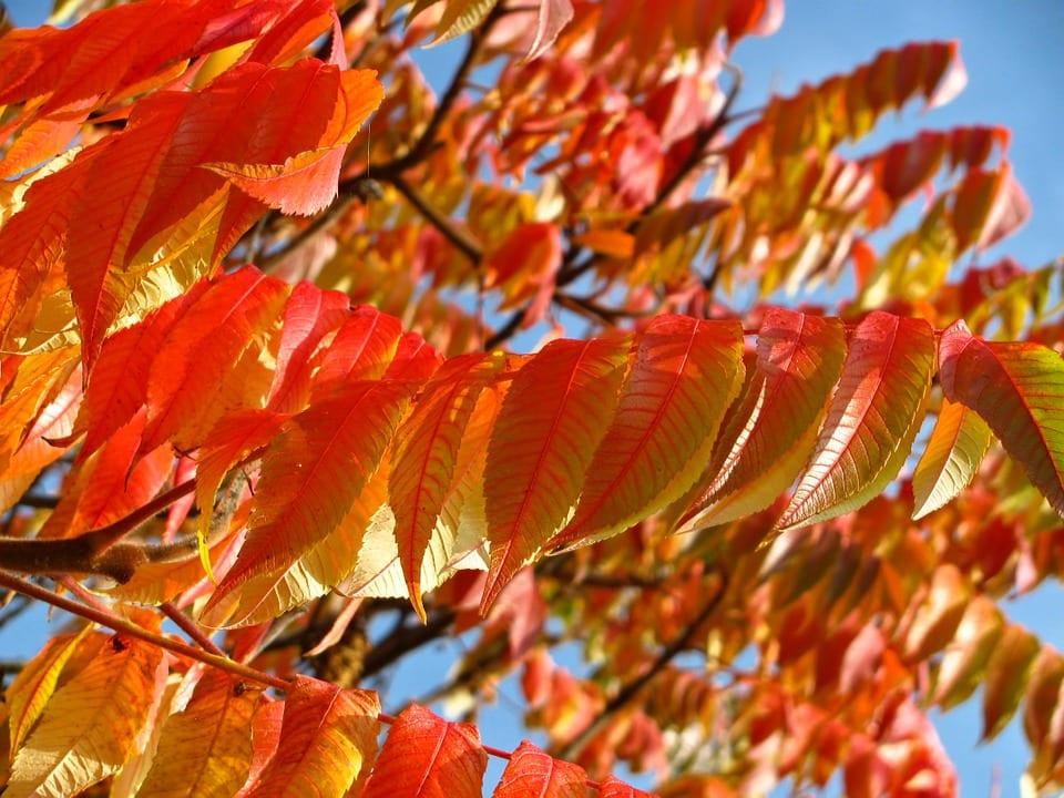 Fall Season Tree Planting Omaha