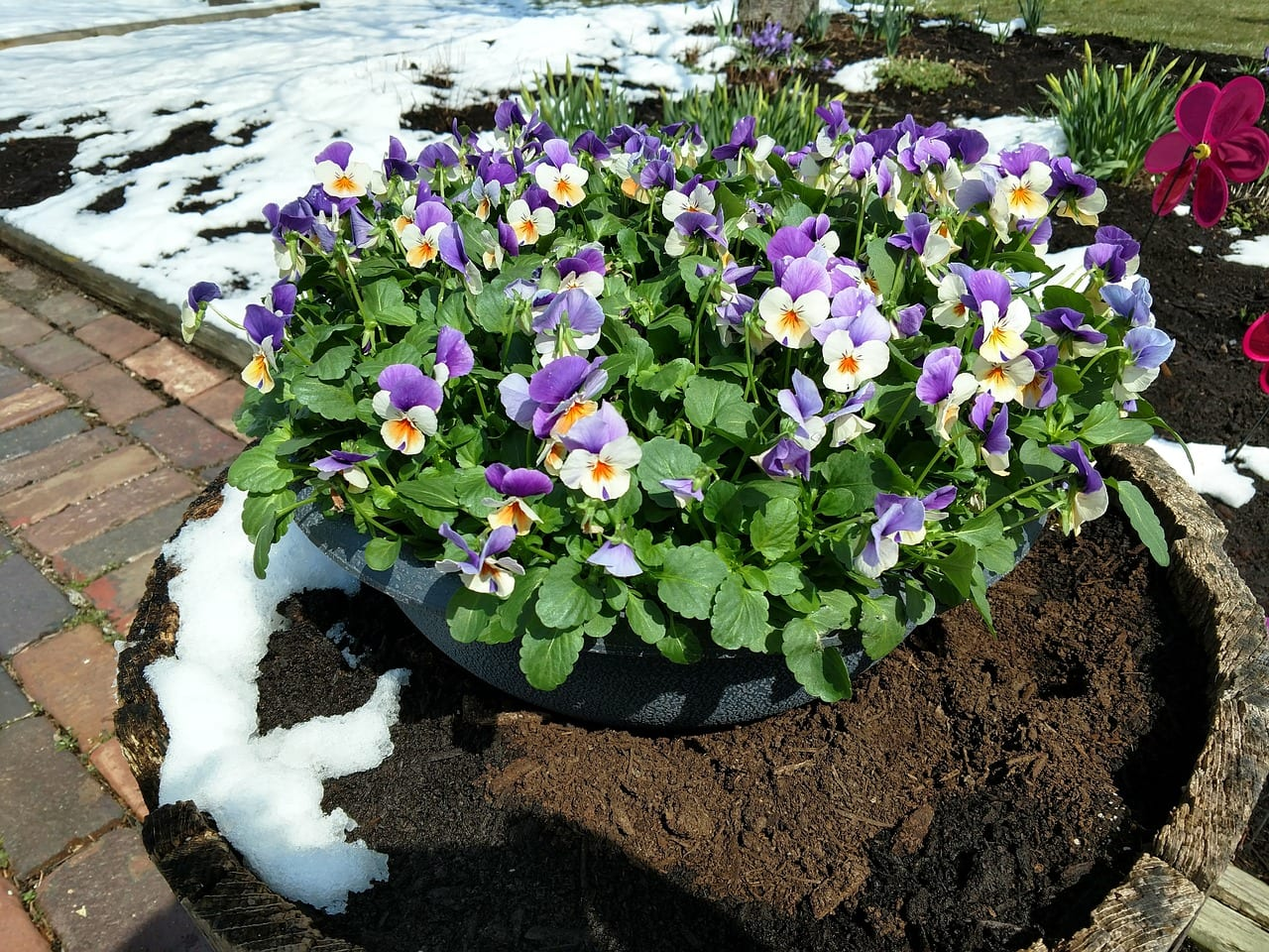 What Plants to Use for Winter Planters and Containers?
