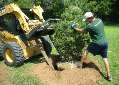 Crew Planting an Evergreen