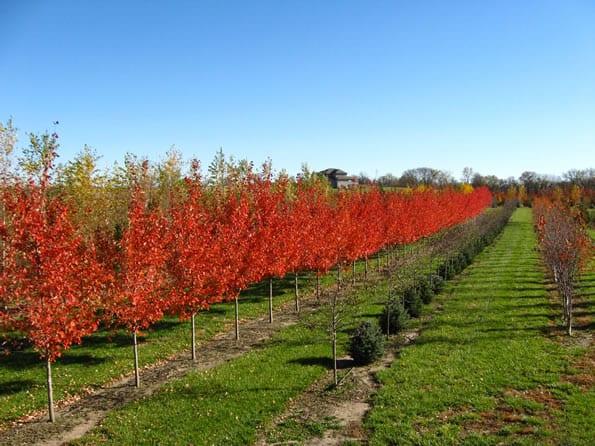 Arbor Hills Tree Farm