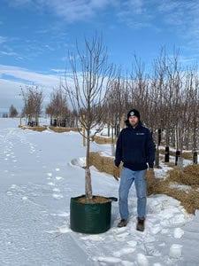 Grow Bag Spring Snow Crabapple