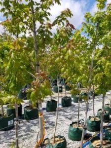 Bag Trees